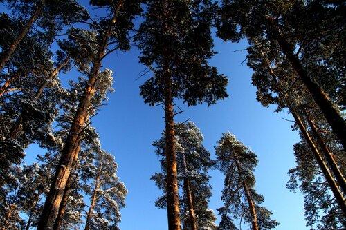 http://img-fotki.yandex.ru/get/5406/for-our-photos.5/0_42e53_2211f194_L.jpg