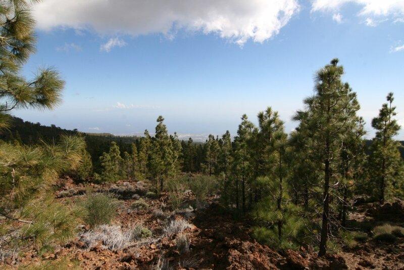 Тенерифе, леса Вилафлора