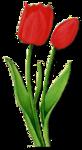 tulip 2.png