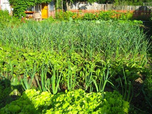 Требования овощных растений к теплу