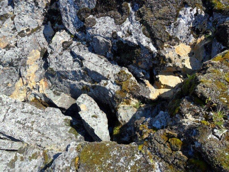 Растительность на камнях.