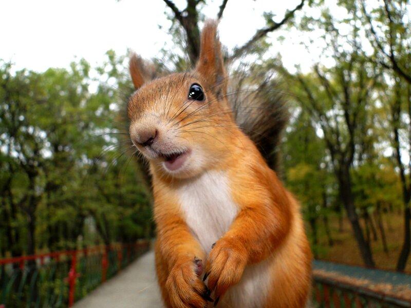 Ба, какие люди! Орехи привезла? А семечки?