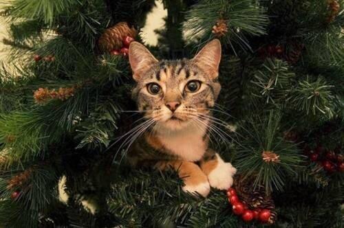 елка кошка