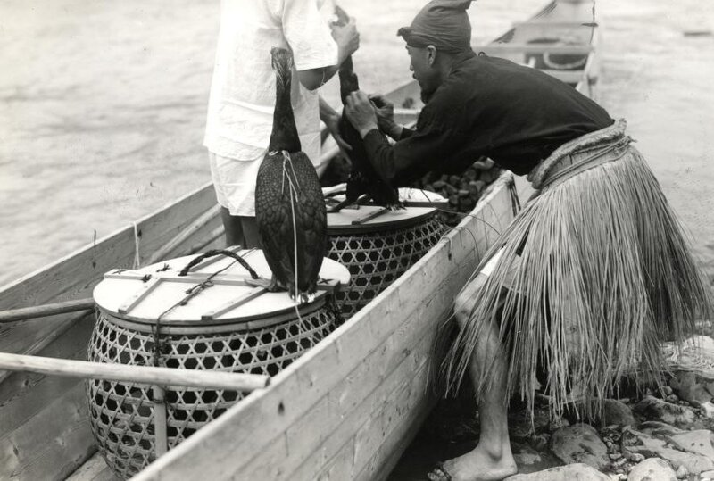 Рыбак перевязывает бакланам зоб перед рыбалкой