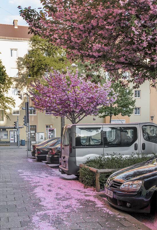Розовые снегА...