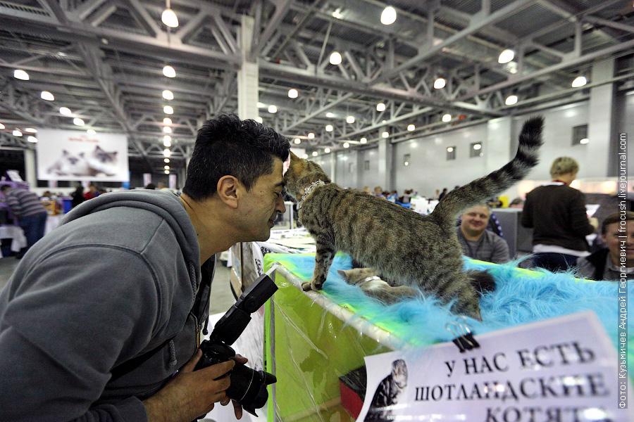 Котики любят фотографов