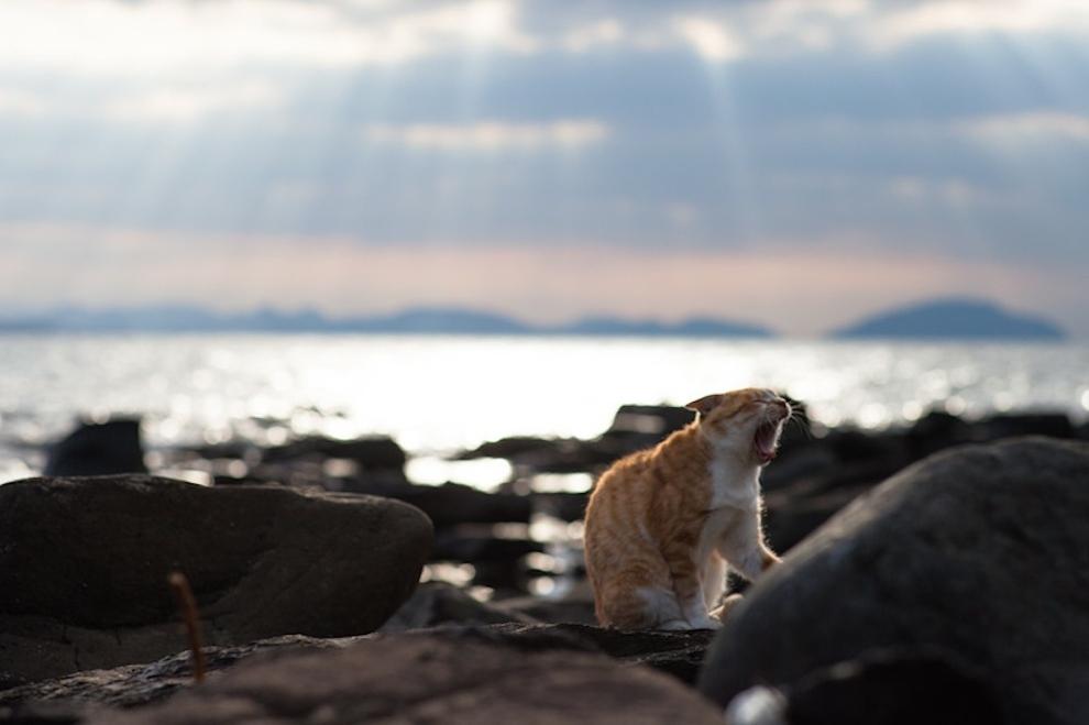 Фото 51 - Кошачий рай в Японии