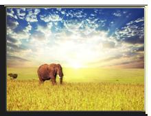 Кения. Elephant in savannah. Фото kamchatka - Depositphotos