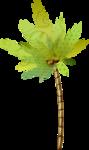 NLD PF Palm tree.png