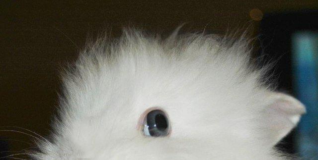 Что получится, если дать кролику вишню