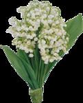 Разные цветы в ПНГ