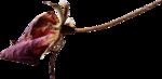 ldavi-ThePoet'sKeepsakes-driedrose2.png