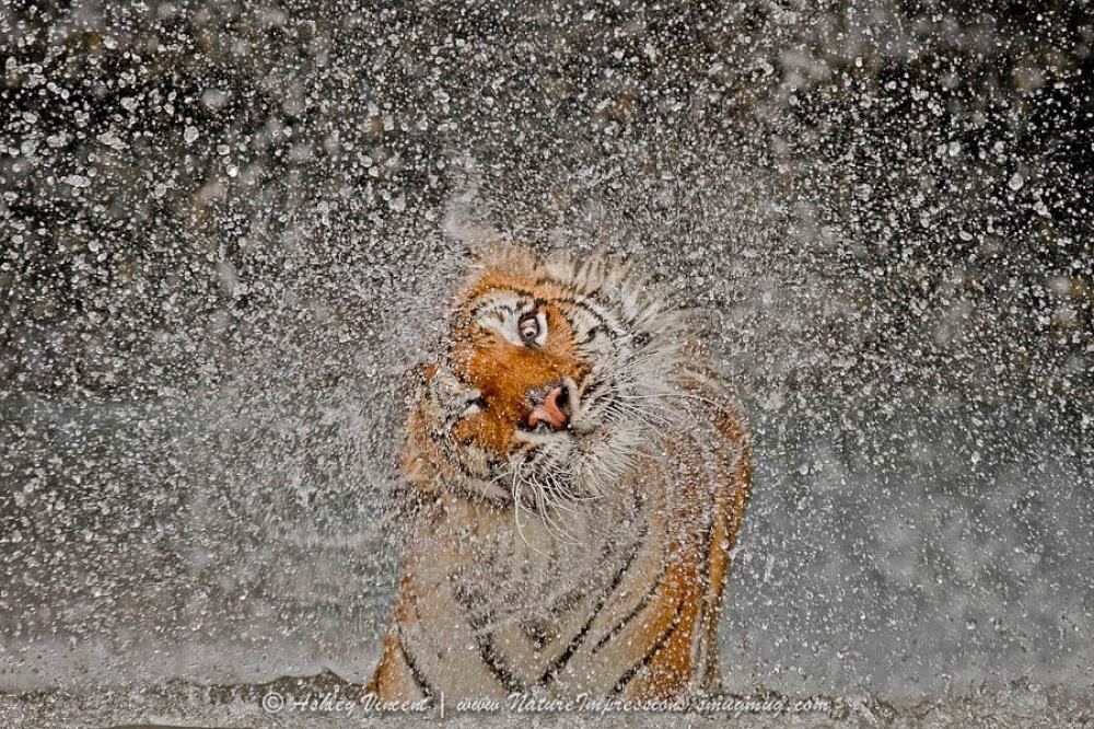 ©Ashley Vincent Победитель Nat Geo 2012в категории «Природа».