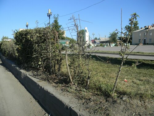 деревья в Куйбышеве