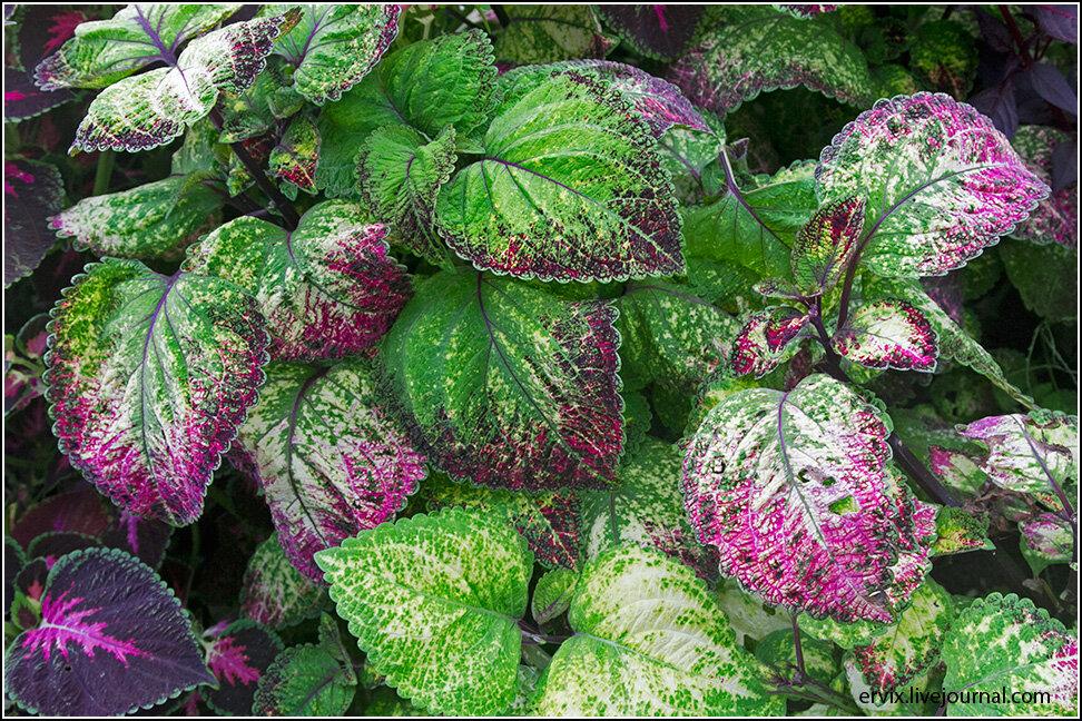 Разноцветные листики
