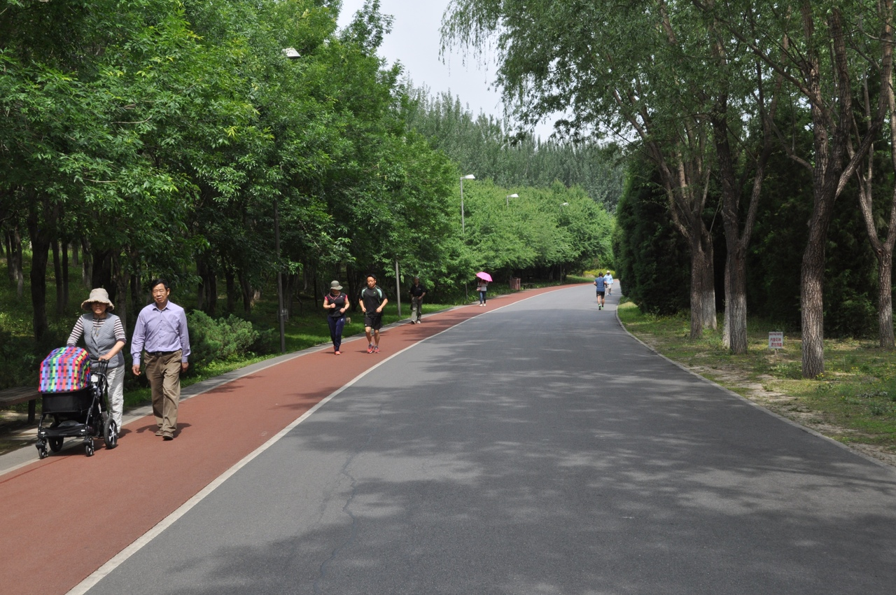 Беговые дорожки в парке