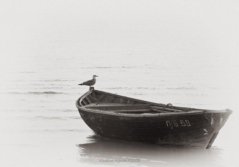 про лодку чайку