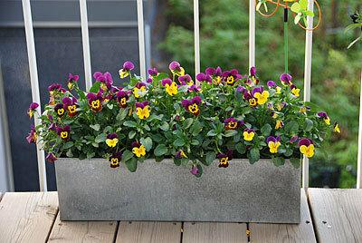 Выбрать цветы для балкона и лоджии