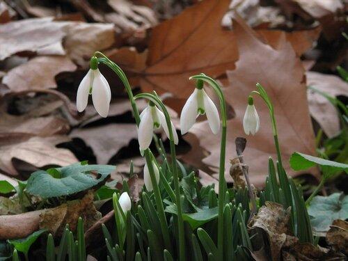 Цветы февраля
