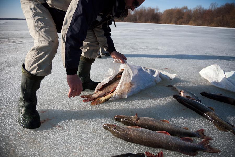 рыбу ловят если она открывает рот