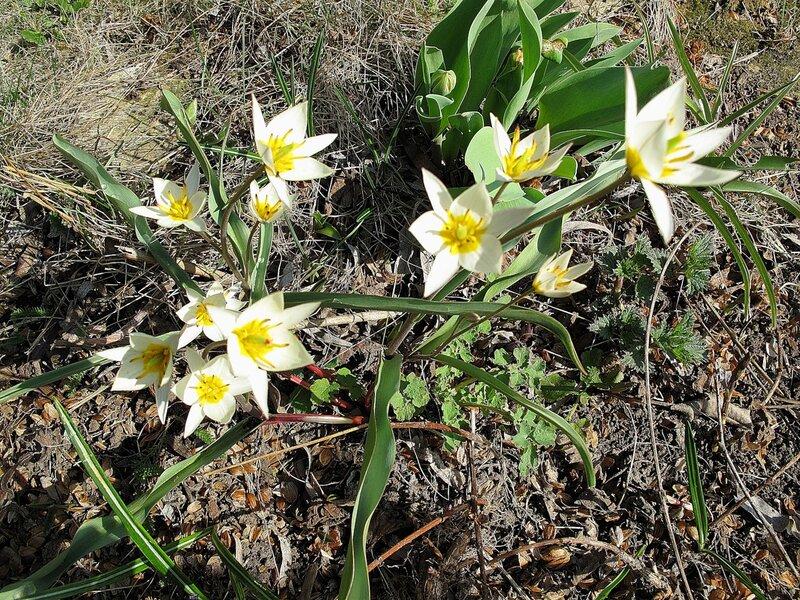 Весна,с.Остров,подворье,райский садик