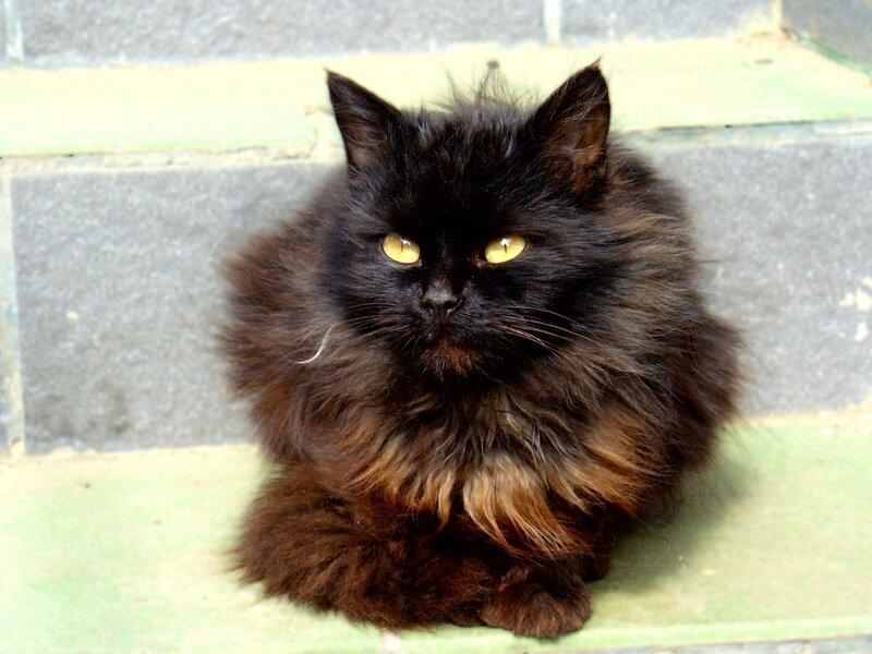 только черному коту и не везет