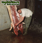 Убиство животных