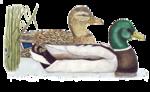 Птицы  разные  0_51c8b_651fa87d_S