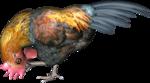 Птицы  разные  0_51ca2_9926141a_S