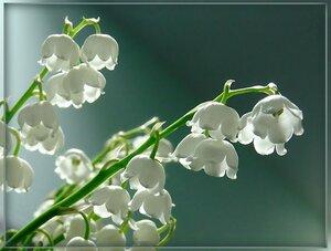 В цветочных салонах Владивостока рассказали, какие цветы самые дорогие в преддверии 8 марта