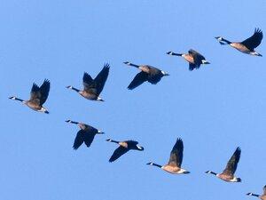 В Приморье сохраняется радиологический контроль за перелётными птицами