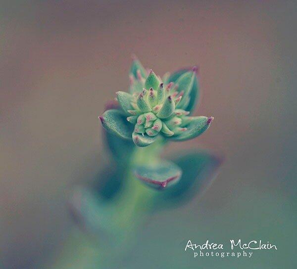 Andrea McClain