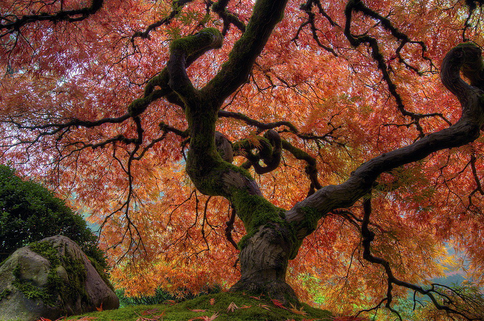 (酷图天地)色彩斑澜的世界(高清多图) - 清风细雨 - 清风细雨