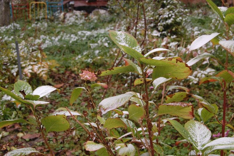 первый снег 24.10.14