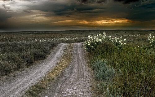 Дорога в степи.