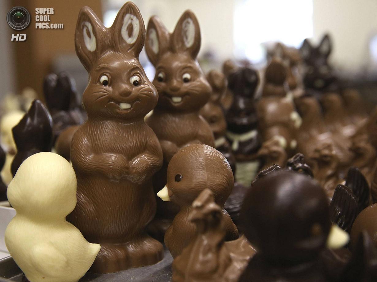 Шоколадные зайцы из Хорнова