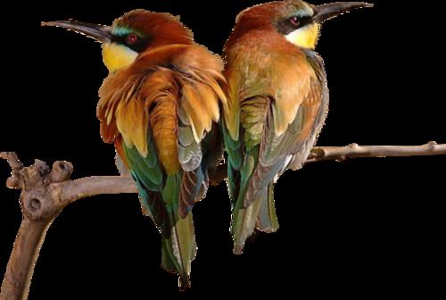 Ptice..... 0_85fec_b8a89619_L