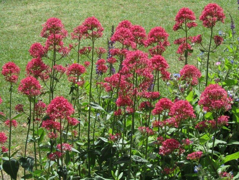 Цветы у Красного дома