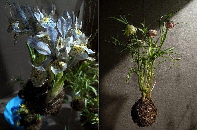 Шарообразие комнатных растений Федора... Федора ван дер Валька.