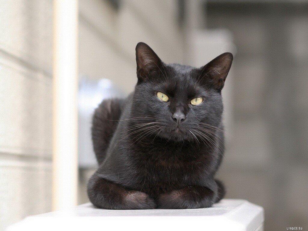 Как определить возраст кошки и котенка
