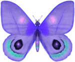 SD DM BUTTERFLY 1.png