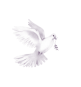 голуби 3.png
