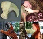 Когти хищников и ногти траводяных