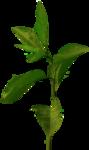 FarmerLisa_SprWhisp_Foliage-Leaves.png