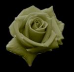 rosegreen.png