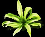 «маленькие сокровища нежности» 0_63b42_89483cd8_S