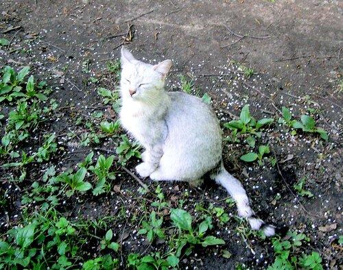 Кошечка греется на солнышке