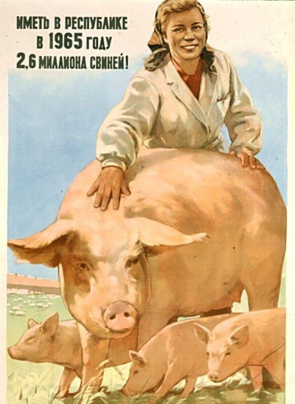 Иметь в республике в 1965 году 2,6 миллиона свиней!