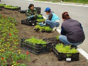 Более трёхсот тысяч кустиков цветочной рассады закупит мэрия Южно-Сахалинска