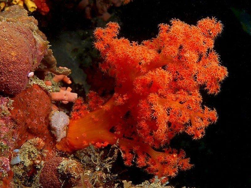 Подводный мир-Kораллы 39269